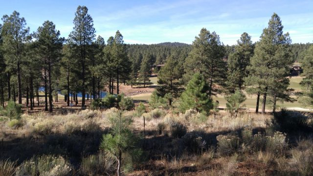 Flagstaff forest meadow