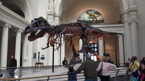 Sue the T-Rex at the Field Museum in Chicago.