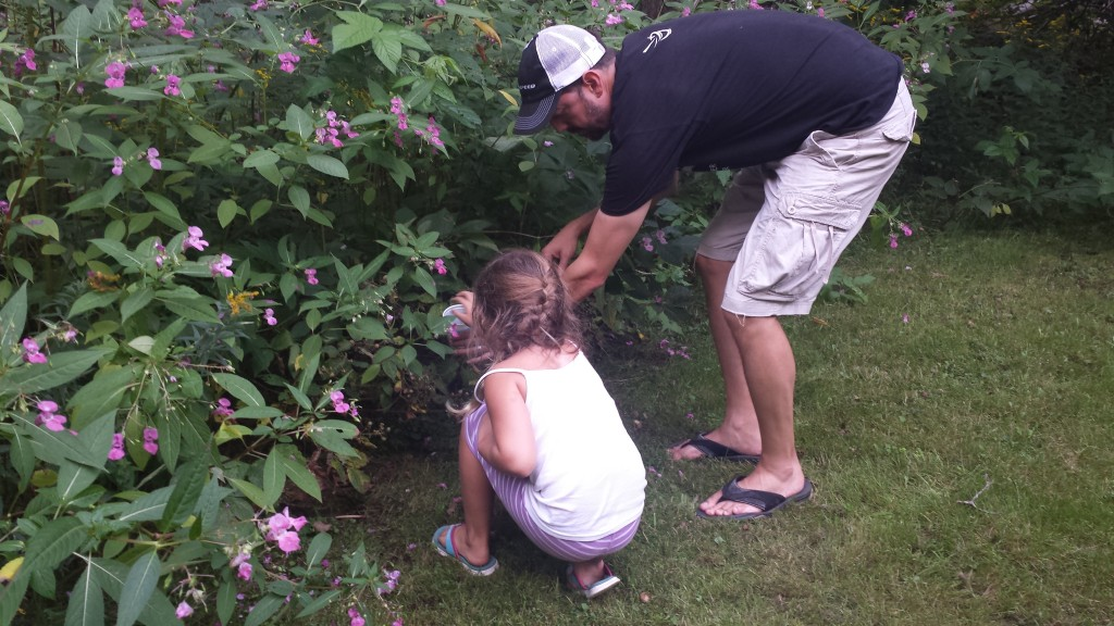 Picking Wild Berries in Maine.