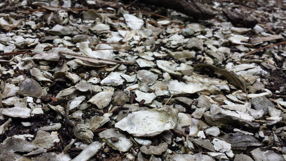 Shell Middens Created by Mound Building Native Peoples.