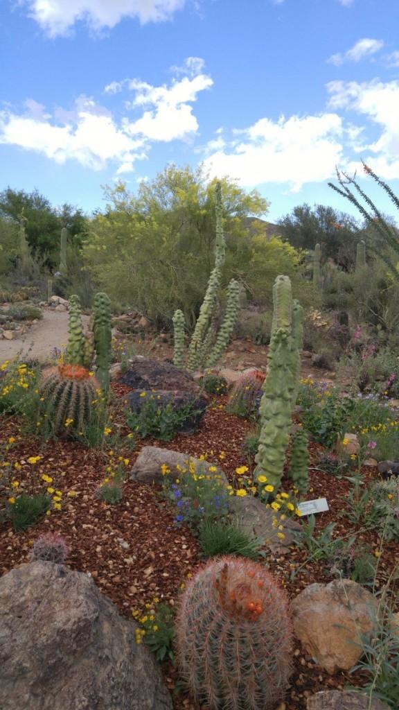 desert montage