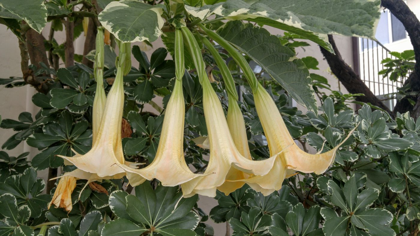 flowers la jolla