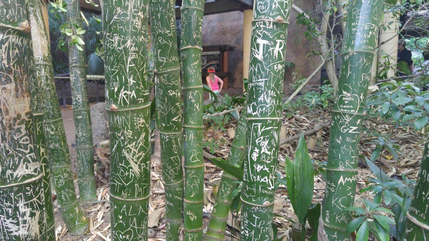 San Diego Zoo Bamboo