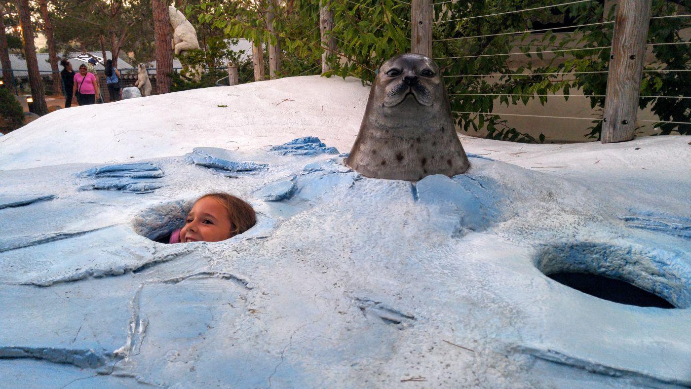 San Diego Zoo Polar Exhibit