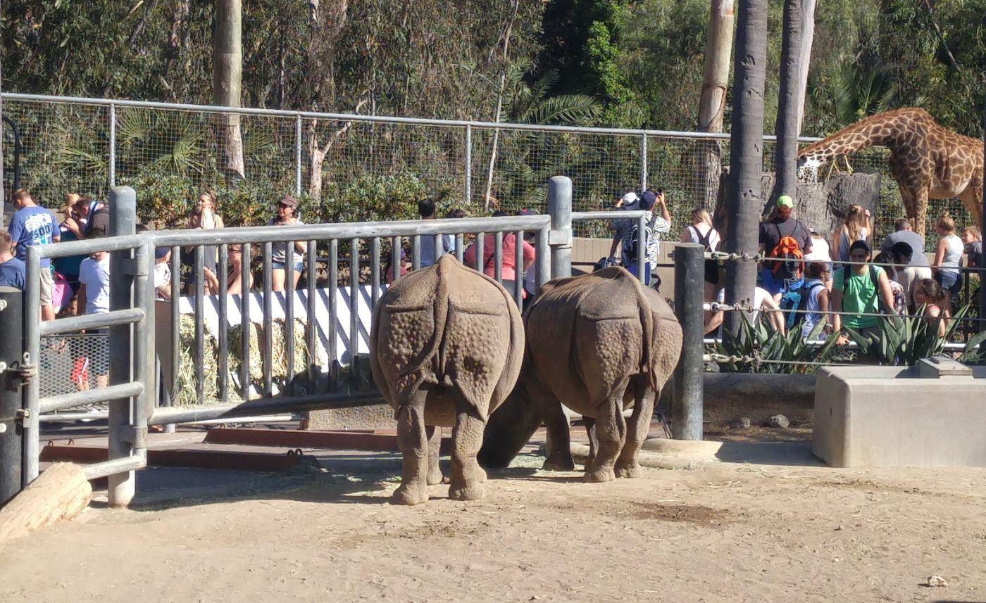 Rhinos San Diego Zoo