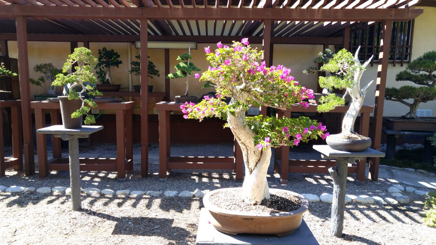 Bonsai Friendship Garden Balboa