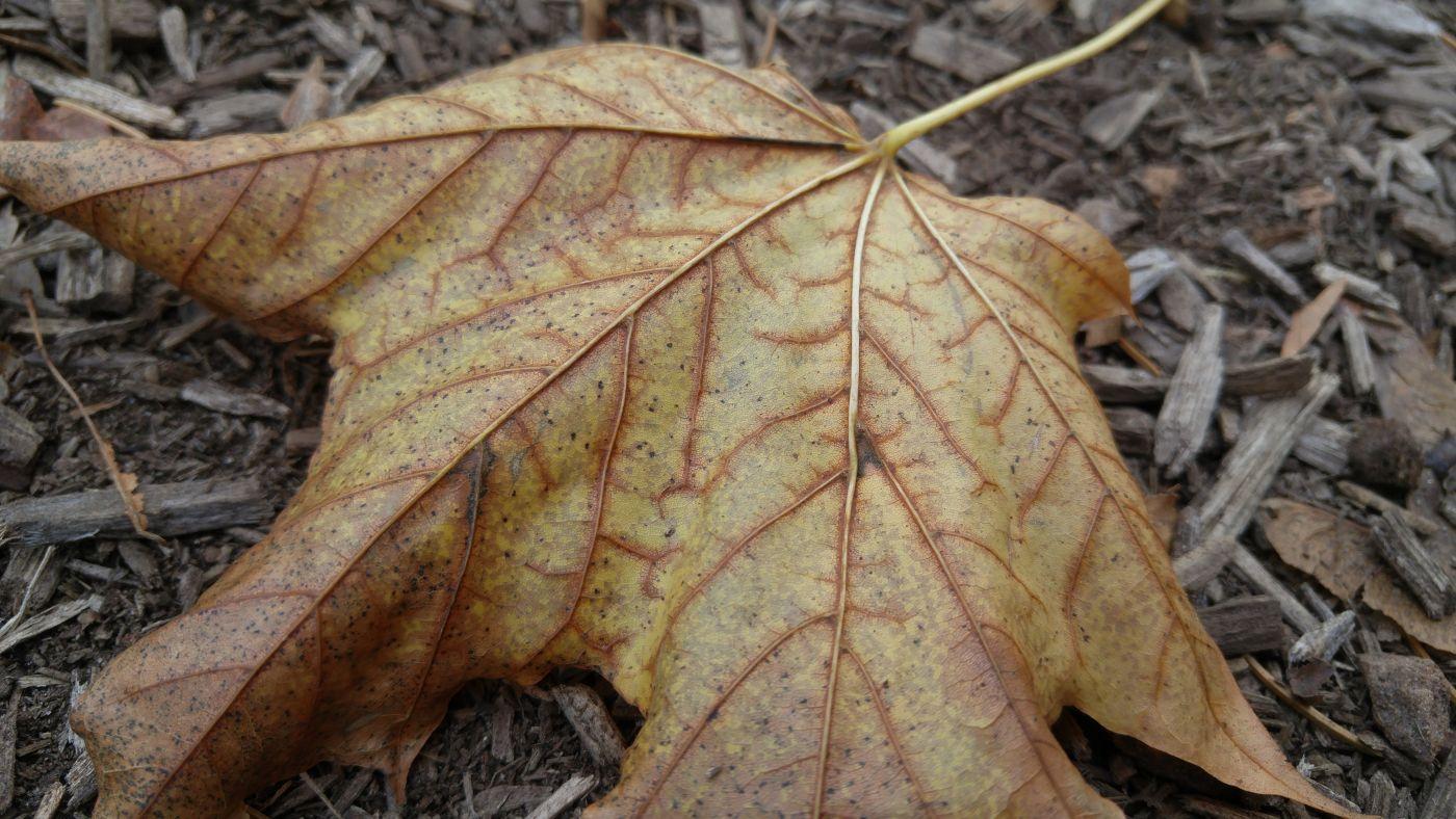 Leaf Saugatuck Mi