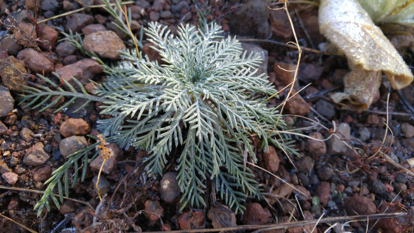 forest plant Flagstaff