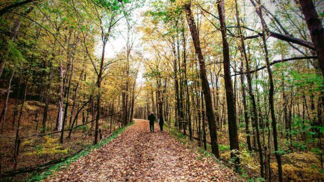 Kalamazoo MI Fall Trail